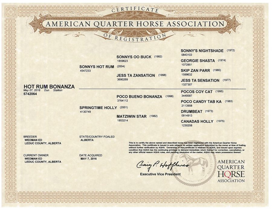 Hot Rum Bonanza - AQHA Papers