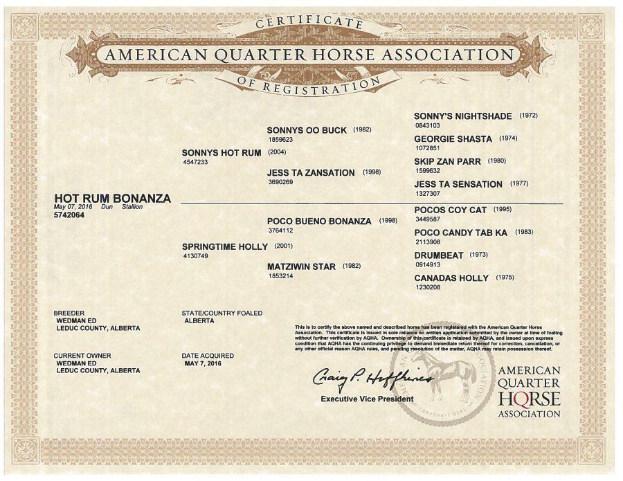 Hot Rum Bonanza - AQHA Papers