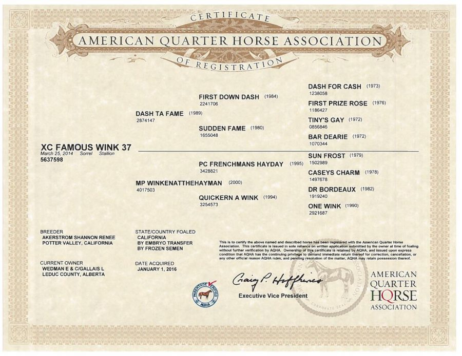 XC Famous Wink 37 - AQHA Papers
