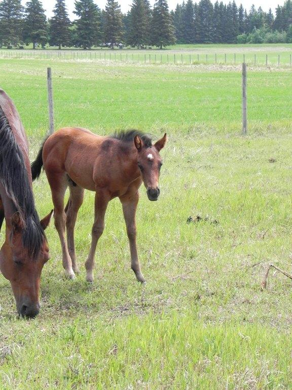 She's All That - 2014 Colt