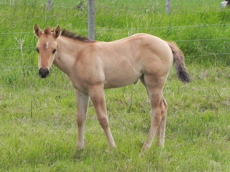 Springtime Holly - 2016 Colt