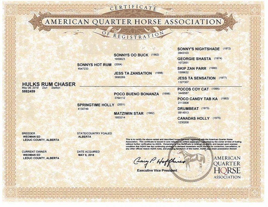 Hulks Rum Chaser - AQHA Papers