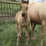 Miss JB Filly
