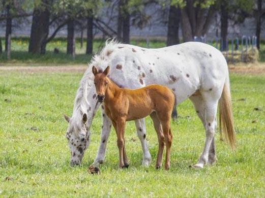 Wedman Farm Horses