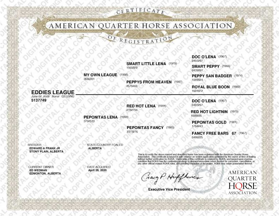 Eddies League AQHA Papers