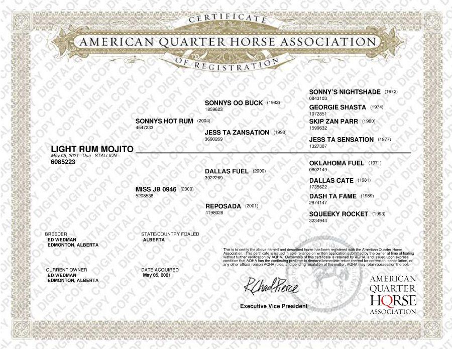 AQHA Papers - Light Rum Mojito