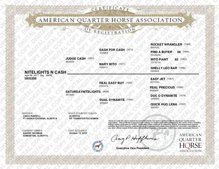 Nitelights N Cash AQHA Papers